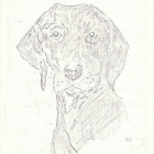 doberman-dog-drawn-from-a-photograph